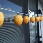 干し柿の作り方、効能、保存方法