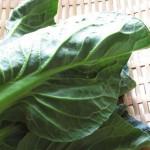 小松菜の栄養価と効能、小松菜の見分け方と保存方法