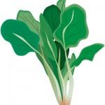 ほうれん草は栄養たっぷり、ほうれん草の選び方と保存方法